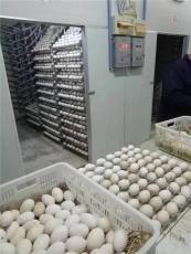 涿州批發小鵝