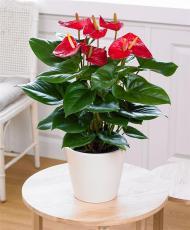 西安办公室花卉租赁