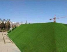 供甘肃工程围挡草皮和兰州建筑工地围挡草坪