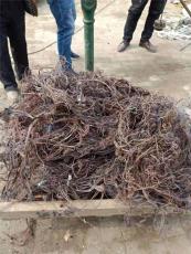 定州市電線電纜回收價格高于同行今日推薦