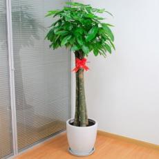 常州綠植租擺-辦公室租花-綠化養護