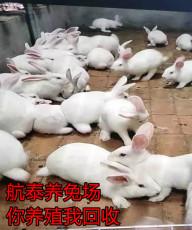 云南省較大的養兔場 中國較大的肉兔養殖場