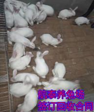 養兔如何致富兔的養殖前景優勢及成本利潤