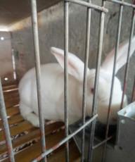 2020年5月野兔價格2020年野兔行情好嗎