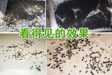 喷灭蚊药多久可以杀灭蚊子长效灭蚊药哪种好