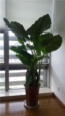 室內花卉綠植租賃租擺服務公司