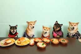 台湾宠物罐头进口清关流程分析
