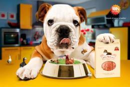 宠物罐头进口清关流程分析