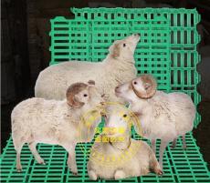 羊床漏糞地板  羊舍漏糞板   羊子漏糞板