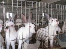 桂林最大的肉兔养殖场