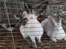 南宁大型肉兔养殖场周边养殖