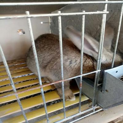 山东航泰野兔养殖场杂交野兔多少钱一组