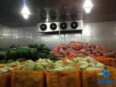 10吨蔬菜建造多大冷库造价成本多少