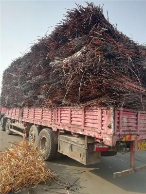 唐山废电缆免费评估价格回收