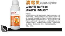 供應柑橘潰瘍病殺菌劑潰腐靈廠家價格