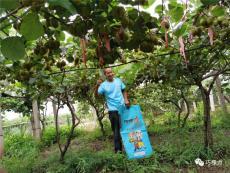 颗粒水溶肥巧棵力猕猴桃专用品质好增产增收