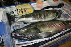 抚远鲜鱼批发 抚远市场活鱼批发价格表