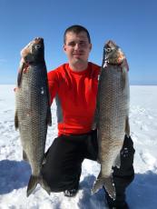 黑龍江烏蘇里白鮭魚批發 新疆高白鮭魚價格