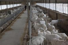 羊奶粉代加工廠家 如何選擇
