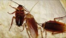 灭老鼠灭蟑螂除臭虫灭跳蚤灭蚊蝇白蚁