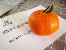 湖南千思農林供應晚熟甘平柑橘果樹良種苗木