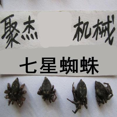 七星蜘蛛 北壁钱蜘蛛 七星蛛 代加工药材粉