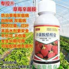 草莓炭疽病的防治方法