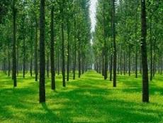 廠家供應苗木 綠化苗木