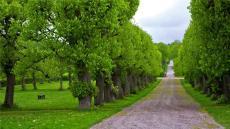 山西晉恒道路綠化