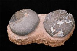 恐龙化石蛋拍卖买家多